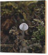 Tree 'shroom Wood Print