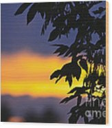 Tree Silhouette Over Sunset Wood Print