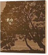 Tree Silhouettes Wood Print