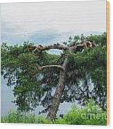 Tree Struck By Lightning Wood Print