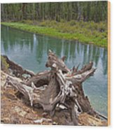 Tree Stump In Des Chutes Nf-or Wood Print