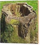 Tree Stump Wood Print