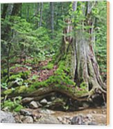 Tree Stump - White Mountains New Hampshire Wood Print