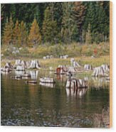 Tree Stumps At Clear Lake Wood Print