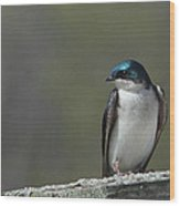 Tree Swallow  Wood Print by James Hammen