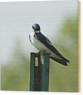 Tree Swallow Wink Wood Print