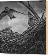 Tree Swallows In Nest Wood Print