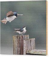 Tree Swallows Mating 1 Wood Print