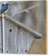 Tree Swallows On Birdhouse Wood Print