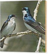 Tree Swallows Singing Wood Print
