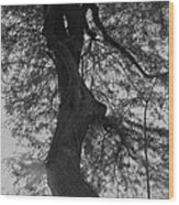 Tree Tangle Wood Print