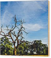 Tree Timestack Wood Print