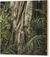 Tree Trunk And Ferns Wood Print