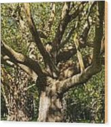 Tree Trunk And Limbs Wood Print