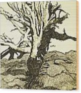 Tree Trunk By The Sea Wood Print