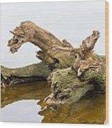Tree Trunk In Water Wood Print