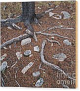 Tree Trunk Roots And Rocks Wood Print