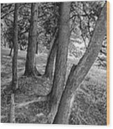 Tree Trunks Wood Print