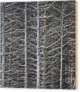 Tree Trunks In Winter Wood Print by Elena Elisseeva