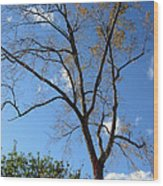 Tree Under Blue Sky Wood Print