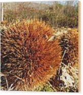 Tree Urchin Wood Print