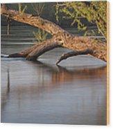 Tree Wash Wood Print