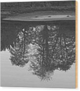 Tree Water Reflection 21 Wood Print