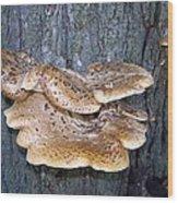 Tree Wings Wood Print