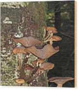 Tree With A Fungus Wood Print