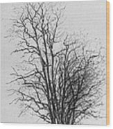 Tree With Figures Wood Print