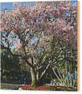 Tree With Pink Flowers Wood Print