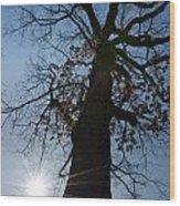 Tree With Sun Wood Print