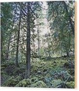 Treequility Wood Print