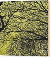 Trees Abstarct Yellow Wood Print