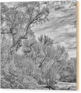 Trees And Clouds Wood Print
