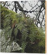 Trees And Ferns And Moss Ecosystem Wood Print by Lizbeth Bostrom