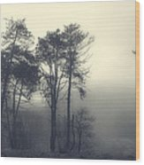 Trees And Fog At Castle Hill Wood Print