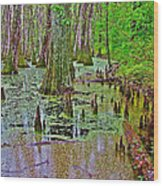 Trees And Knees In Tupelo/cypress Swamp At Mile 122 Of Natchez Trace Parkway-mississippi Wood Print
