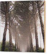 Trees And Mist Wood Print