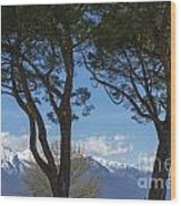 Trees And Snow-capped Mountain Wood Print