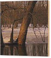 Trees At Collins Creek Wood Print