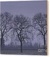 Trees At Night Wood Print