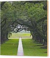 Trees At Oak Alley Plantation Wood Print
