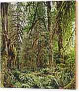 Trees At Olympic National Forest Wood Print