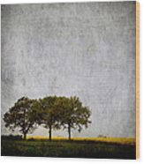 Trees At Sunrise Wood Print by Carol Leigh