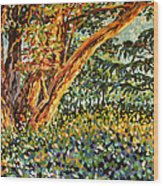 Trees At Sunset In Lafayette Park Wood Print