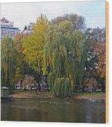 Trees At The Boston Public Garden Wood Print