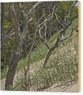 Trees At The Edge Of A Dune At Silver Lake Wood Print