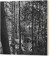 Trees Bw Wood Print by Nelson Watkins