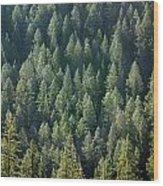 1a9502-trees Lit Up, Wy Wood Print